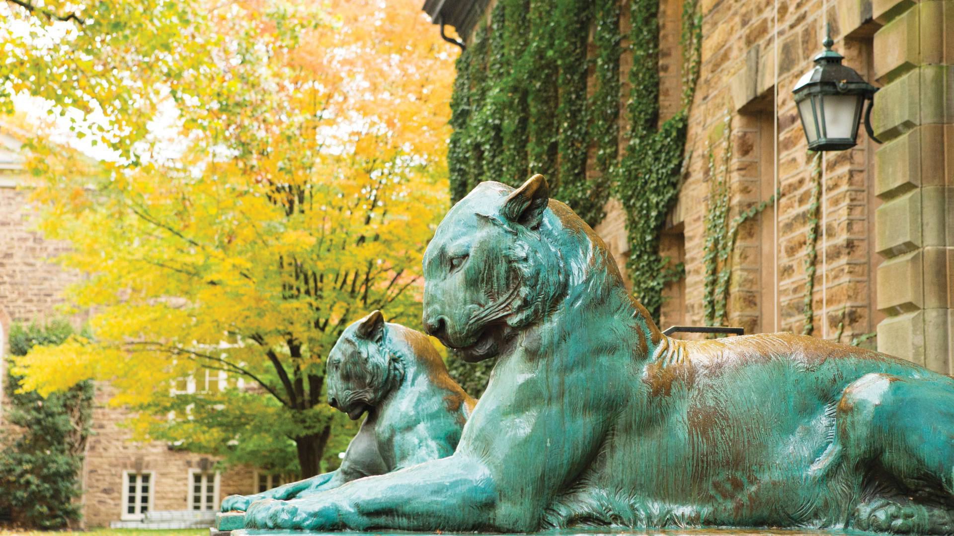 Tigers outside Nassau Hall