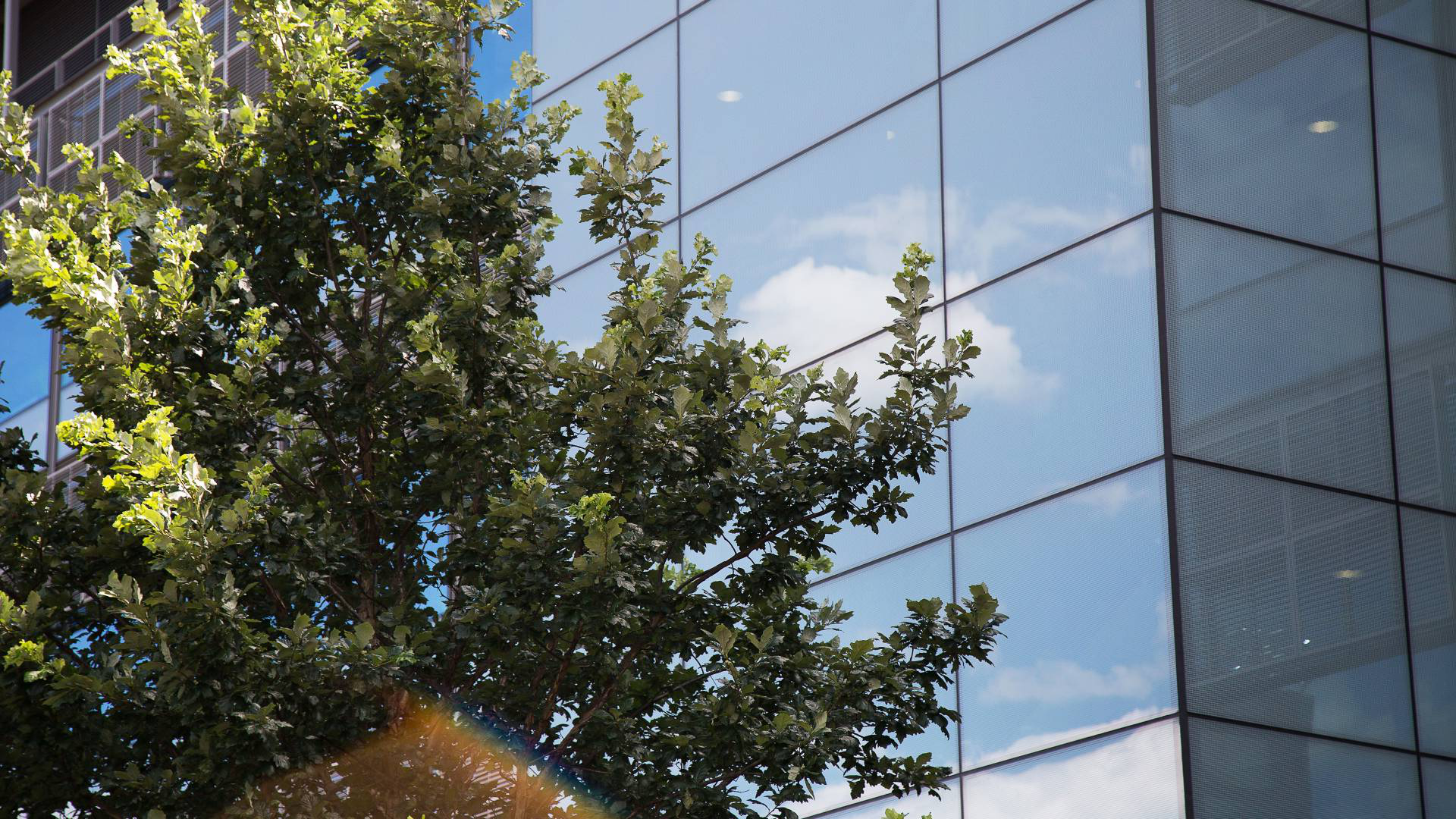 glass facade with clouds and tree