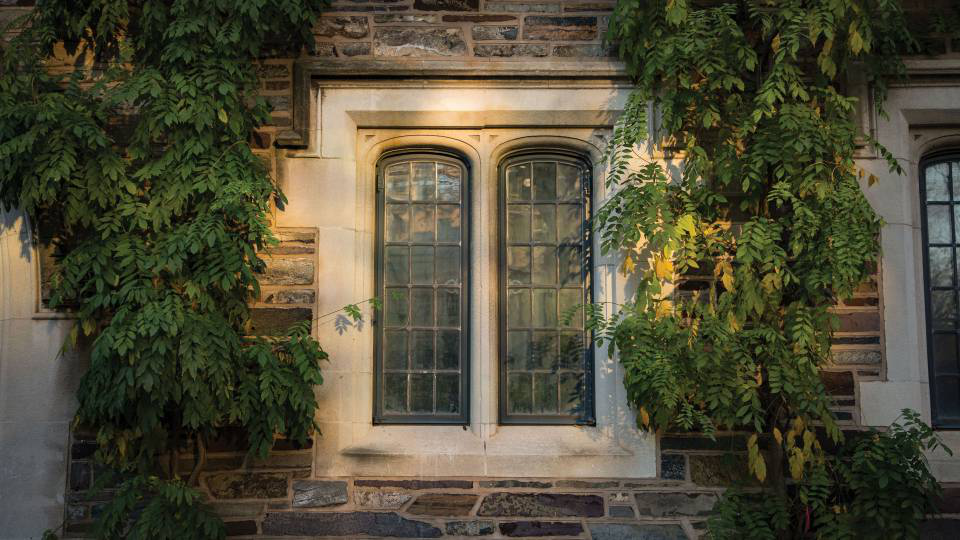 Windows surrounded by Ivy